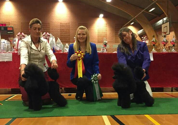Poodle show in Denmark